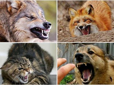 Первая помощь при укусах животными